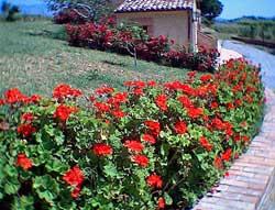 Foto AGRITURISMO LE FARNIE di ALTOMONTE